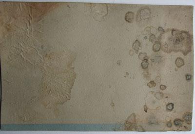 Dos du document, moisissures avant restauration